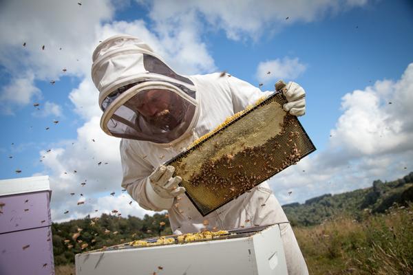 Egmont Beekeeper